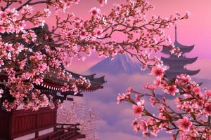 Сакура – цветущий символ Японии>