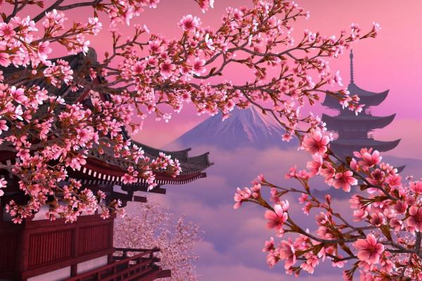 Сакура – цветущий символ Японии