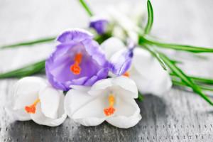 Искусственные цветы в интерьере гостиной: неизменный атрибут стильного декора>