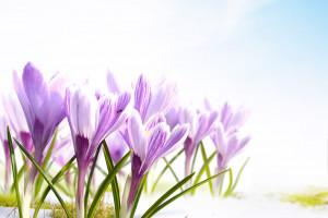 Искусственные цветы в интерьере прихожей – незаменимый атрибут фитодизайна>