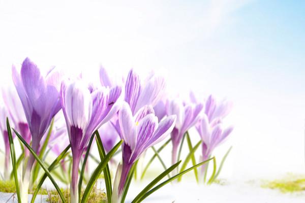 Искусственные цветы в интерьере прихожей – незаменимый атрибут фитодизайна