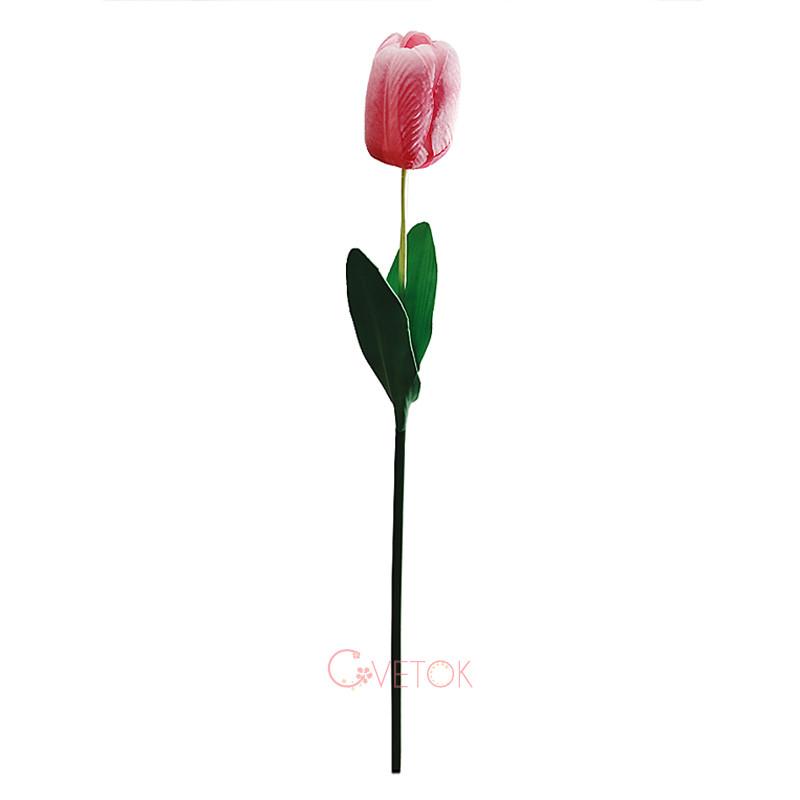 Тюльпан большой штучный Z-5