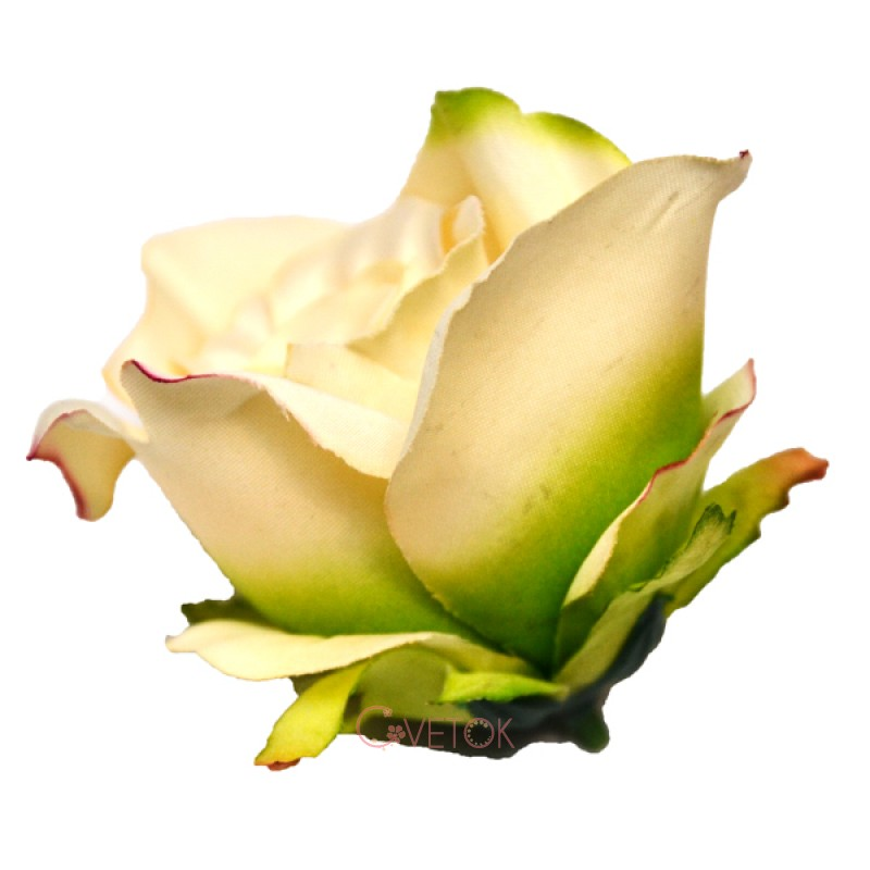 Голова розы B-10
