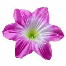 Пресс-цветок <span>(37)</span>